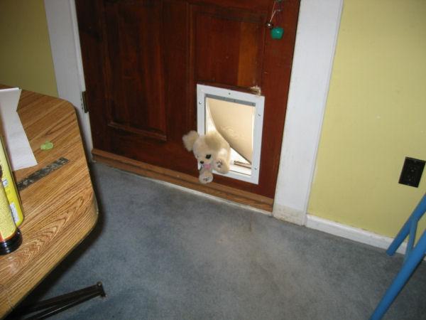 dogdoor070904.jpg