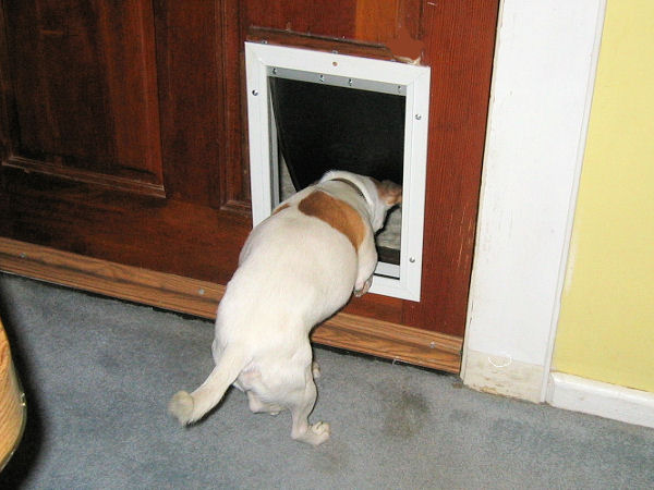 dogdoor070908.jpg