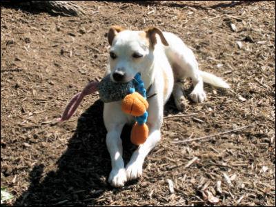 Gunny the Wonder Dog