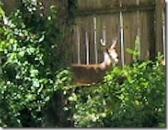 deer111105